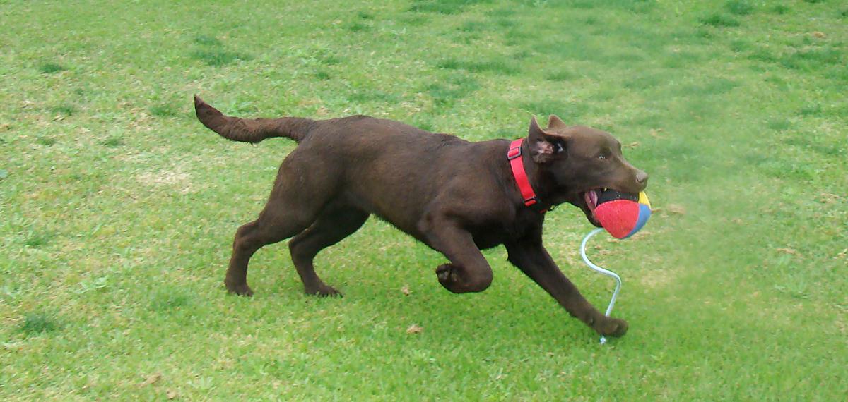 Tienda de equipamiento para adiestramiento canino